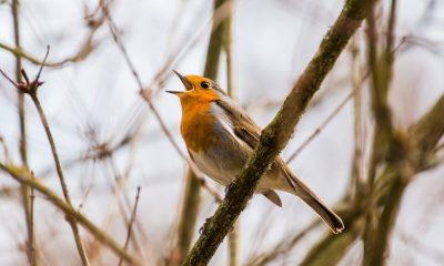 scheduled bird tweet