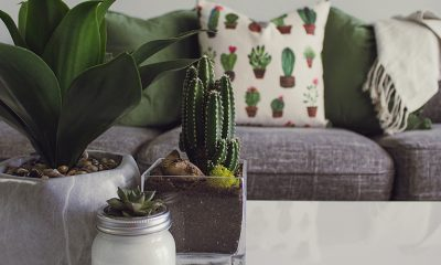 Home interior with gray couch, cactus pillows, and succulents on the coffee table in front of the couch.