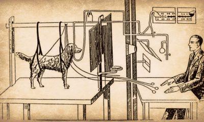 pavlov experiment