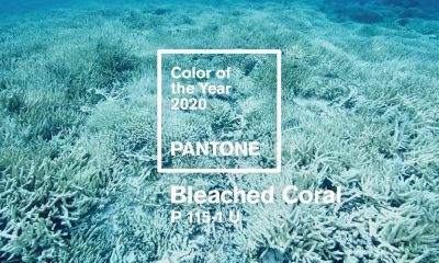 pantone unofficial color of 2020