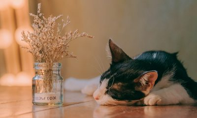 Sleeping cat with plant, fighting grind culture.