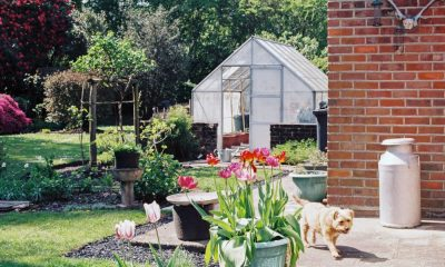greenhouses boom