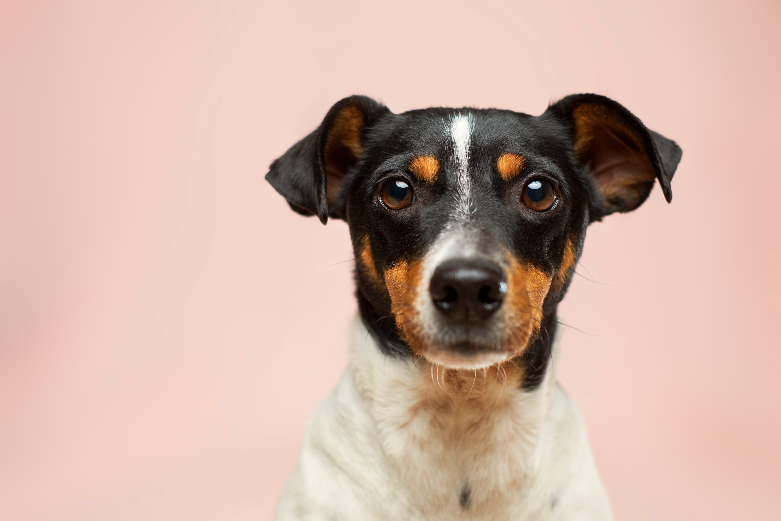 dog startup